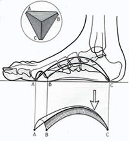 Biomeccanica del piede - Ortopedia Dr. Mazzucchelli